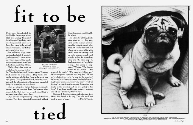Article Preview: fit to be tied, May 1985 1985 | Vanity Fair
