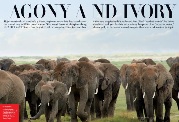 Article Preview: AGONY AND IVORY, August 2011 2011 | Vanity Fair